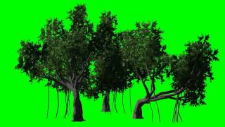"trees moved by the wind - ""Chroma Key Effects"""