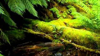 видео Австралия: достопримечательности, отели Австралии информация о стране