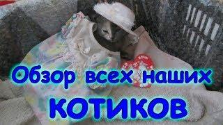 Обзор всех котов, остался один котенок, Ириска пропала. (09.17г.) Семья Бровченко.