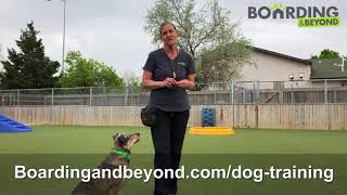 Colorado's Top-Rated Dog Training