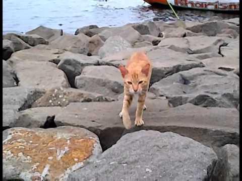 アンチョールの猫 Ancol Cat@Jakarta