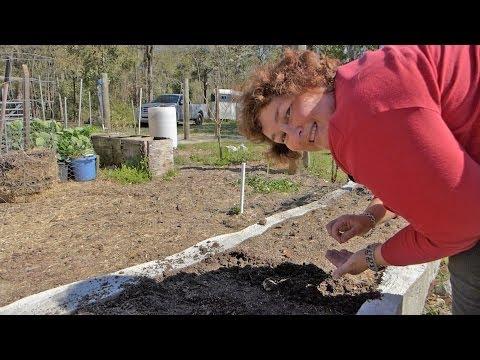 Growing Vegetables From Heirloom Seed