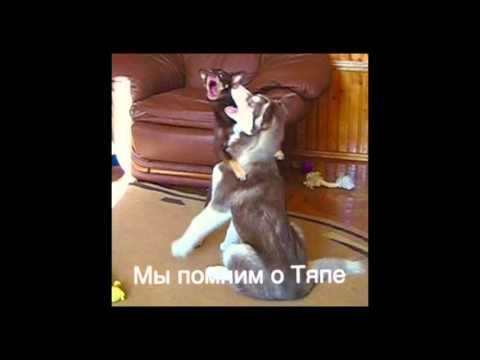 Собачья преданность или Сюся оплакивает Тяпу