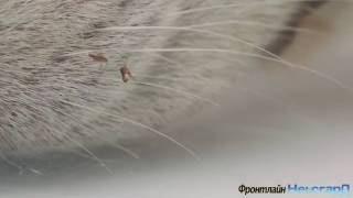 Фронтлайн Нексгард - ветеринарные препараты(, 2016-08-25T20:37:14.000Z)