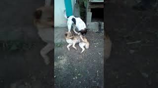 Собаки. Угарные видео.