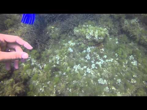 Scuba Diving Port El Kantaoui Tunisia