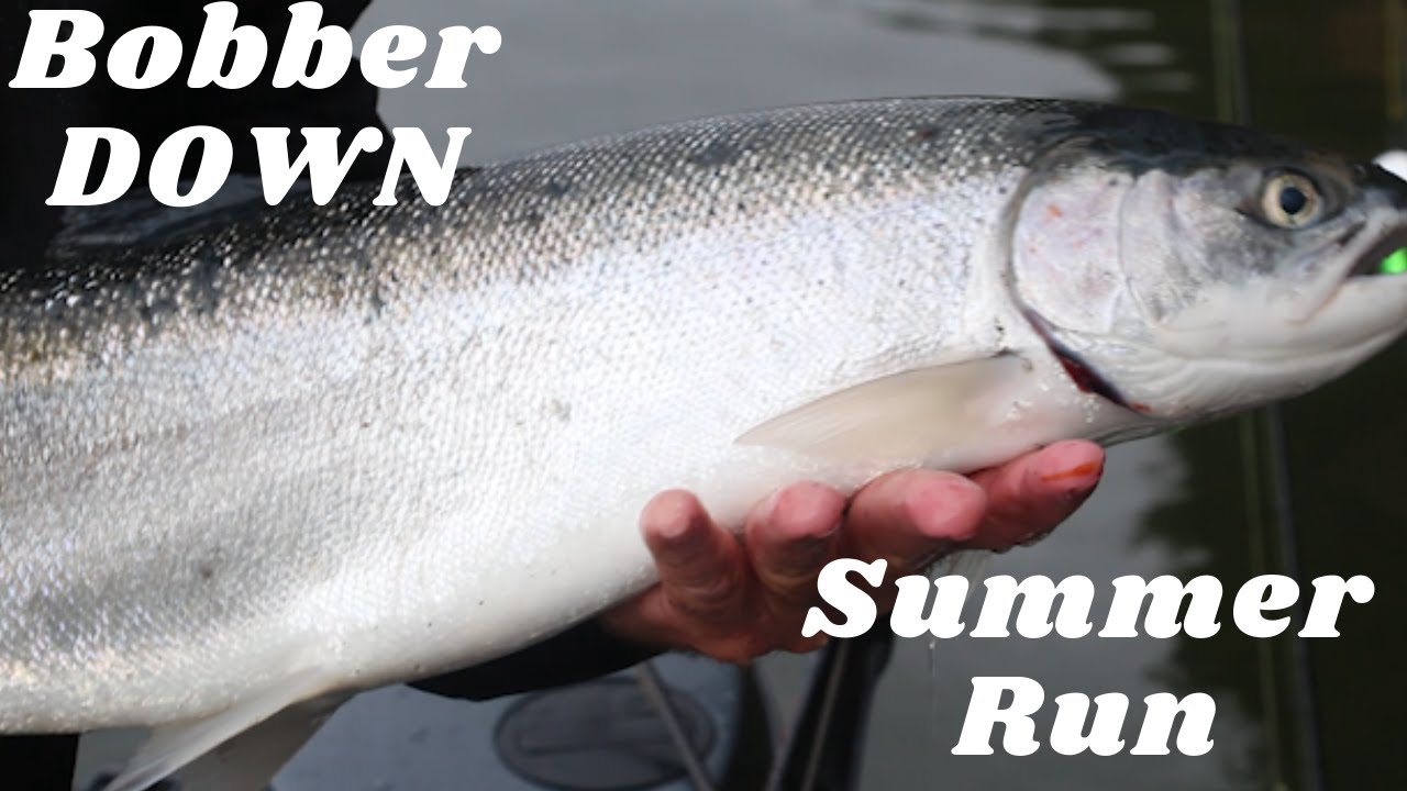 Anchor Fishing For Summer Run STEELHEAD * Bobber DOWN * | June 13 , 2020 |
