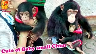 To watch.....Cute of Baby small Chimp