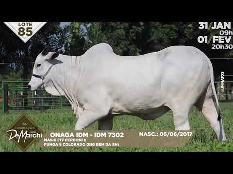 LOTE 85