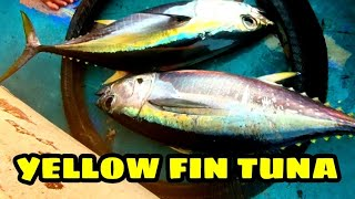 EP2- Day3 Part2 - Catch and cook Yellow Fin Tuna | Sinigang + Kilawin