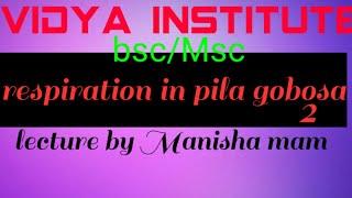pila in hindi