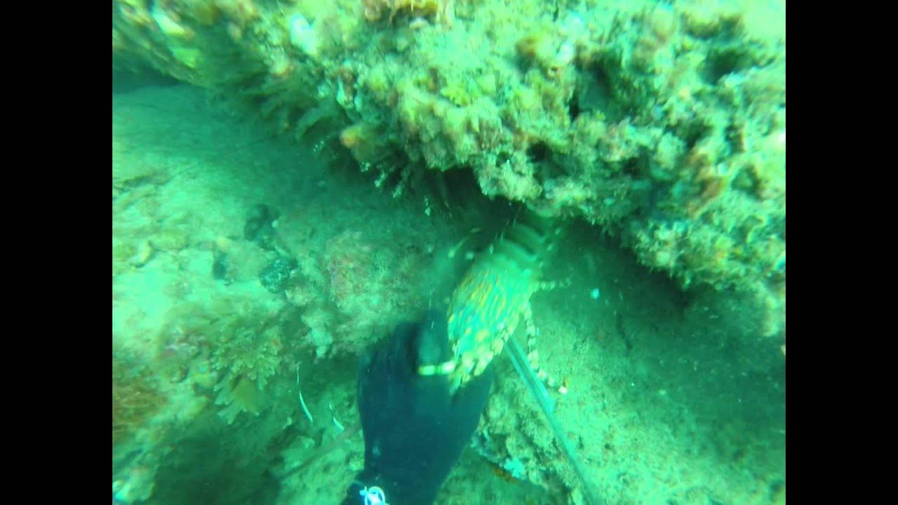 Spearfishing Sunshine Coast - Crayfish and Spanish Mackerel
