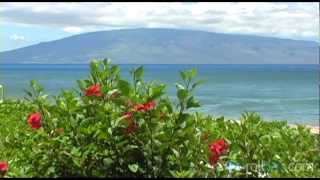 Beaches on Maui, Hawaii - Tourism B-roll Video Footage