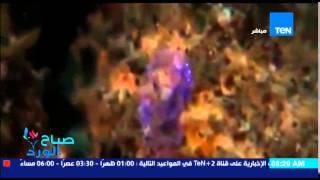 صباح الورد - فيديو يظهر ياقوت البحر وهو لديه القدرة على التخفي ويصبح كائن لا مرئي لو سلط الضوء عليه