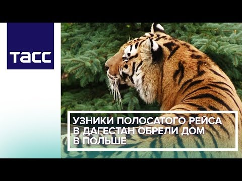 Узники полосатого рейса в Дагестан обрели дом в Польше
