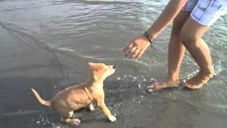 my dog hachi