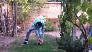 dubstep / dance / popping /