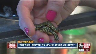 teenage mutant ninja turtles spur sale of pet turtles