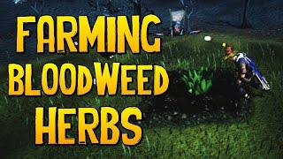Runescape - Bloodweed Herbs Are AMAZING Money!
