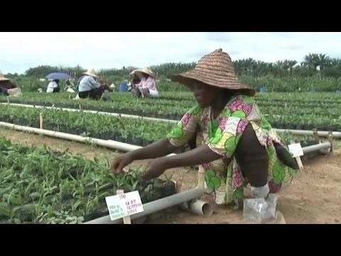 Gabon, PROMOTION DE L'AGRICULTURE