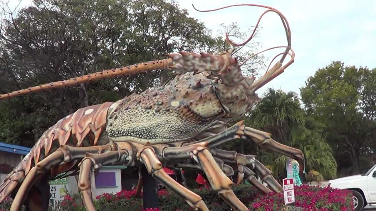 Guinness World Record Lobsterlol Worlds Biggest Lobster Rain