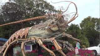 GUINNESS WORLD RECORD LOBSTER...lol & WORLDS BIGGEST LOBSTER RAIN BARREL ISLAMORADA FL