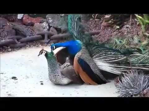 Hvordan man får s big dick