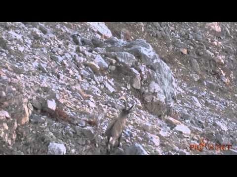 Siberian Ibex Hunting in Kazakhstan