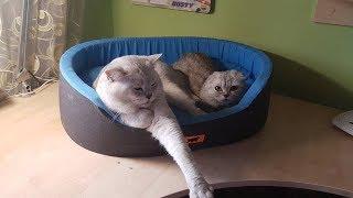 Знакомство Кошки Хлои и Кота 😻 Первый День Будет ли Любовь? 🐱 Cats Love Животные
