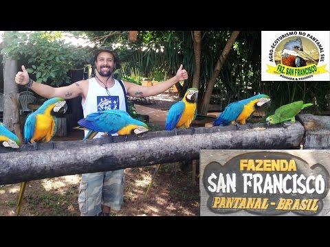 Pantanal (MS) - Fazenda San Francisco [Dicas de Viagem BR]