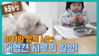 아기와 대형犬 시루가 함께 살아가는 법! I TV동물농장 (Animal Farm) | SBS Story