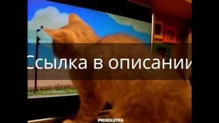 Премьера: «Коты-аристократы» смотреть мультфильм онлайн в HD качестве