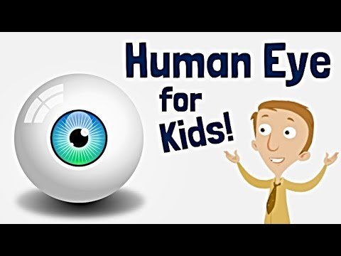 Human Eye For Kids Anatomy Learning Video Youtube