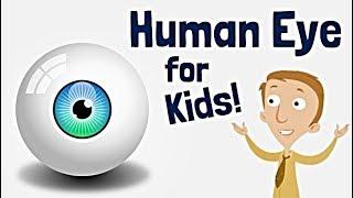 Human Eye for Kids | Anatomy Learning Video
