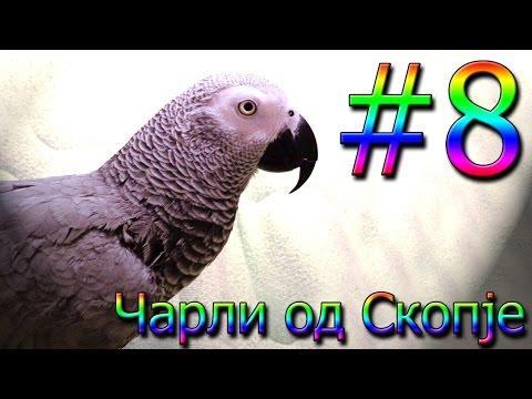 Чарли од Скопје / Charli od Skopje #8 [Charlie: African Grey Talking Parrot]