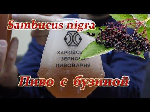 Sambucus Nigra. Пиво с бузиной.