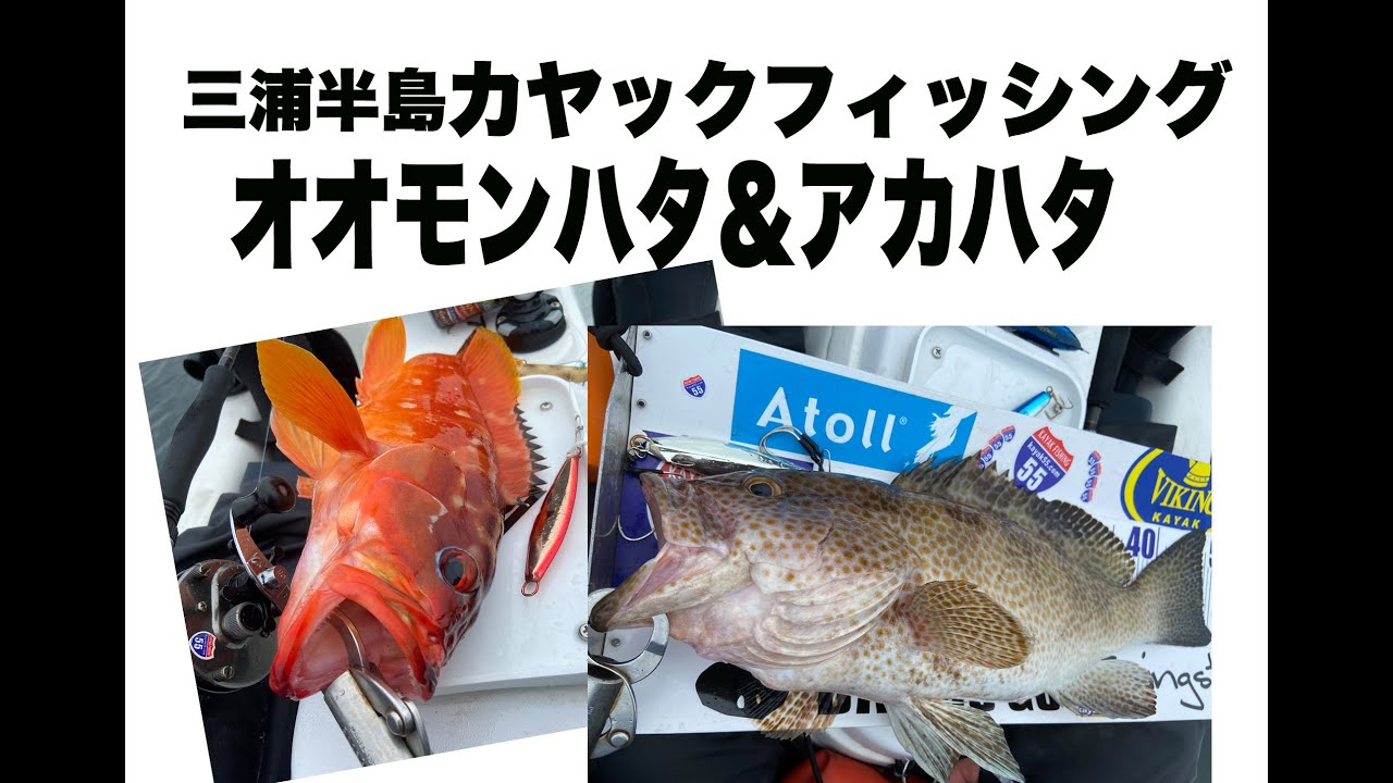 三浦半島カヤックフィッシング・オオモンハタ&アカハタ
