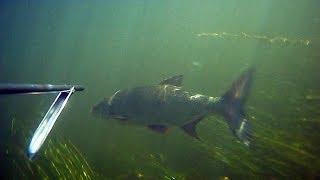 Подводная охота Лето-осень2011_ч.1. Spearfishing. Записки охотника
