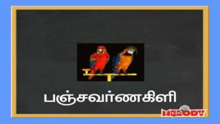 Name of Birds in Tamil Language