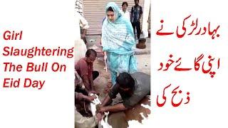 Girl Slaughter The Bull On Eid Day | Hollyday Of Muslim Festivals Celebrations Eid Ul Azha