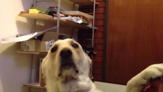 Dog & Beethoven