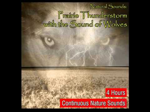 Prairie Thunderstorm and Rains with the Natural Sound of Wolves