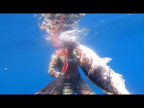 Dentex Spearfishing 2019