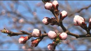 Антонио Вивальди Antonio Vivaldi Времена года Весна