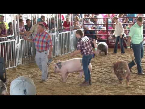 LCF - 4-H and FFA Market Hog Show