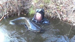 Подводная охота две охоты два выстрела и море эмоций