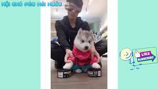 Chó con dễ thương đáng yêu   Cute puppies doing funny things 2018