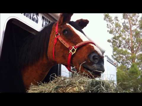 E-Z the Talking Horse 002