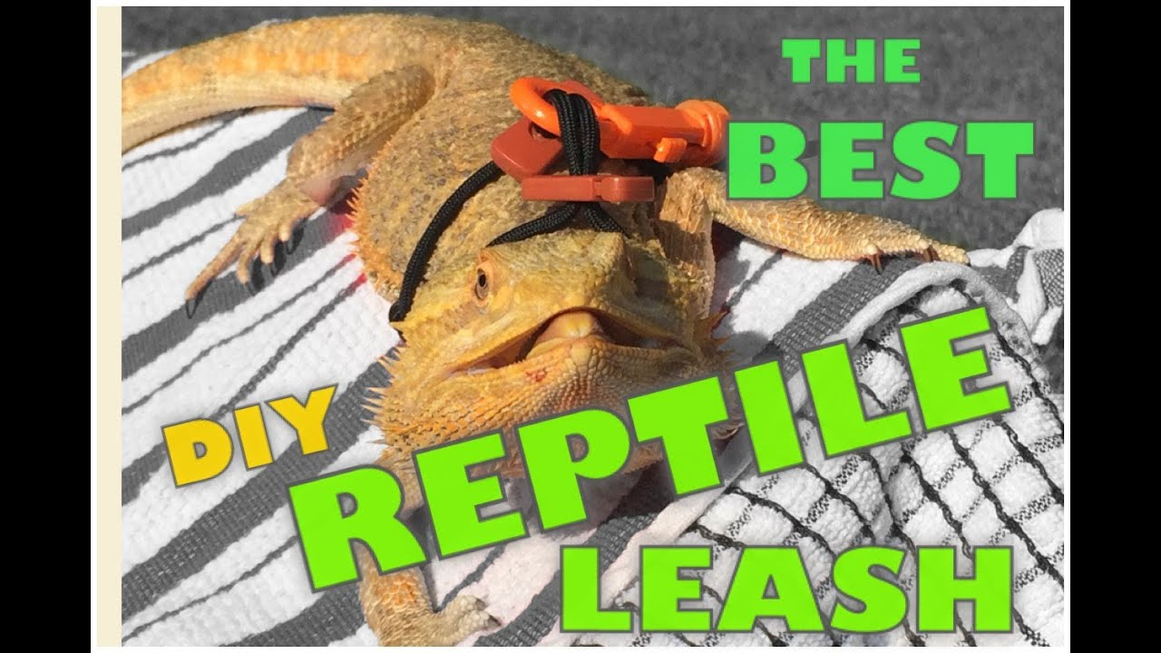 DIY: The Best Harness Leash for a Reptile - YouTube
