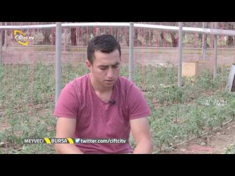 Meyveci - Serada Gülpembe Domates Yetiştiriciliği / Bursa